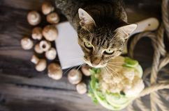 Cute cat standing on rustic table with vegetables. Royalty Free Stock Photos