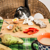 Cute cat stealing cheese from a table. stock images