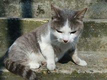 Cute cat on a step Stock Photos