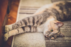 Cute cat stretching on carpet Stock Image