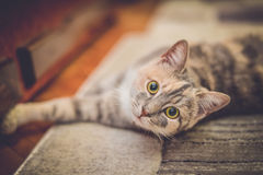 Cute cat stretching on carpet Stock Photography