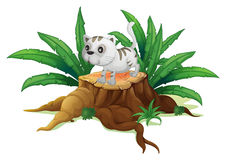 A cute cat on a stump with leaves Stock Photography
