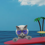 Cute cat surfing on a surfboard at the ocean near the beach. Cute cat surfing on a surfboard at the ocean near the sand beach Stock Images