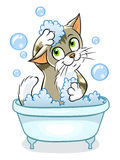 Cute cat taking a bath Stock Photos