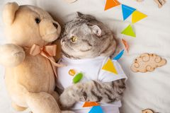 Cute cat with a teddy bear, on a light background with toys. Funny animals.  royalty free stock image