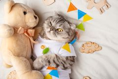 Cute cat with a teddy bear, on a light background with toys. Funny animals, with space for an inscription. Sweet dream.  stock photos