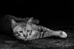 Cute cat in Thailand. Cute cat is looking at something with curiosity in Thailand Stock Photography