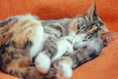 Cute cat of tortoiseshell color stock photos