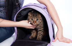 Cute cat with travel house. Royalty Free Stock Photo