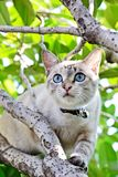 Cute cat on the tree Stock Photography