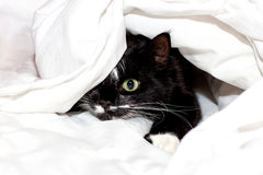 Cute cat under a blanket. Black-white cute cat under a blanket Stock Images