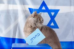 Cute cat and Vote box on election day over Israel flag background. royalty free stock image