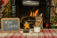 A cute cat waiting for Santa. By the fireplace with a gingerbread man cookie and cupcake Royalty Free Stock Photos