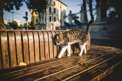 Cute cat walking. On wooden bench stock photos