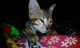 Cute cat wallpaper stock images