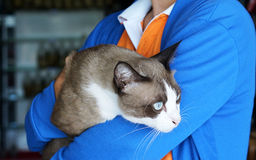 The cute cat. Cat in the warm arm of the owner Royalty Free Stock Photos