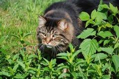 Cute cat watching bird Stock Images