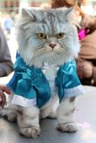 Cute cat wearing a blue jacket at the Spring festival in New York stock image