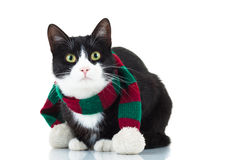 Cute cat wearing knitted christmas scarf Royalty Free Stock Images