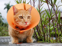 Cute cat wearing orange plastic cone collar Royalty Free Stock Photos
