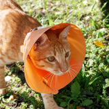 Cute cat wearing orange plastic cone collar Royalty Free Stock Images
