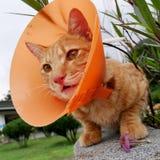 Cute cat wearing orange plastic cone collar Stock Images