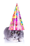 Cute cat wearing a party hat Stock Image