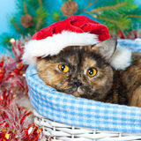 Cute cat wearing Santa's hat Royalty Free Stock Photography