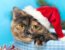 Cute cat wearing Santa's hat Stock Image
