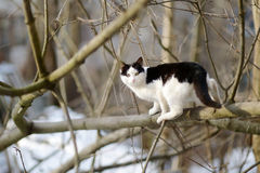 Cute cat at winter Royalty Free Stock Images