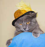 Cute cat with woman hat Royalty Free Stock Photo