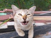 Cute cat on wood floor. Close up cute cat on wood floor royalty free stock image