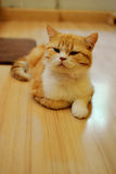 Cute cat. On wooden floor Stock Photography