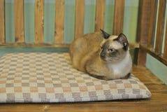 Cute cat. On wooden floor Stock Photos