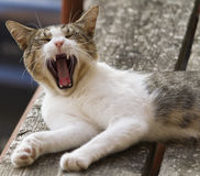 Cute cat yawning. On floor stock photo