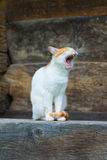Cute cat yawns on the porch. In village Stock Photography