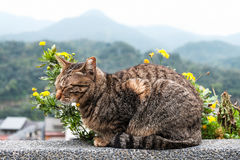 A cute cat with yellow flowers Stock Image