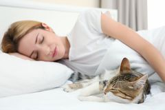 Cute cat and young woman relaxing. On bed Stock Image