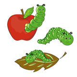 Cute caterpillars set. Hand drawn vector illustrations Royalty Free Stock Images
