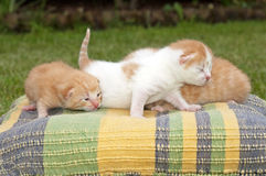 Cute cats. Beautiful pets, young cute cats royalty free stock photos