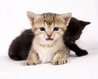 Cute cats Royalty Free Stock Photography