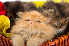 Cute cats Royalty Free Stock Photo
