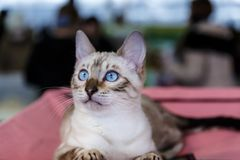 Cute cats animal exhibition. Beautiful and cute cats animal exhibition stock images