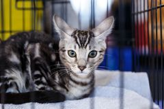 Cute cats animal exhibition. Beautiful and cute cats animal exhibition stock photos