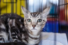 Cute cats animal exhibition. Beautiful and cute cats animal exhibition royalty free stock photography