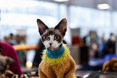 Cute cats animal exhibition. Beautiful and cute cats animal exhibition stock image