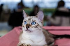 Cute cats animal exhibition. Beautiful and cute cats animal exhibition royalty free stock photos