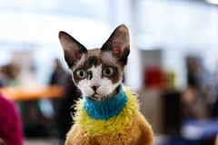 Cute cats animal exhibition. Beautiful and cute cats animal exhibition stock photography