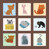 Cute cats cards character different pose funny animal domestic kitten vector illustration. Pet feline portrait fluffy young adorable mammal whisker cartoon vector illustration