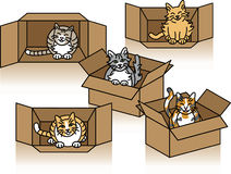 Cute Cats in Cartons Stock Image
